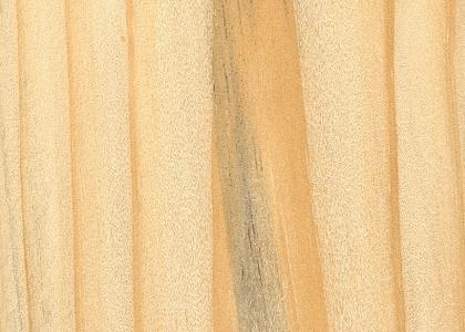 Madeira Pinus Tratado